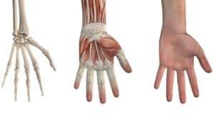 main poignet arthrose main poignet douleur main et poignet anatomie